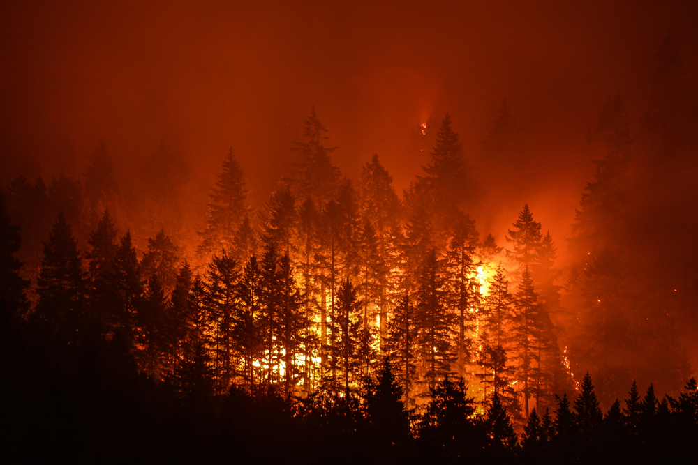 Are wildfires increasing in frequency and severity due to climate change?